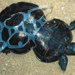 خطر زباله برای حیات جانوری