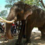 سفر مسئولانه و حمایت از حیوانات