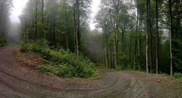جنگل دو هزار