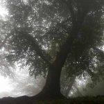 جنگل دالخانی به مه غلیظ و سرسبزی اش معروف است و یکی از دیدنی های رامسر به حساب میآید.