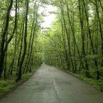 پارک جنگلی گیسوم
