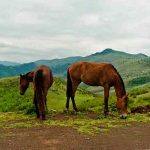 اسب های روستای کیاسر