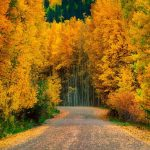 جنگل نوردی