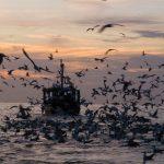 تفریحات دریایی قشم؛تجربهای ناب در آبهای نیلگون