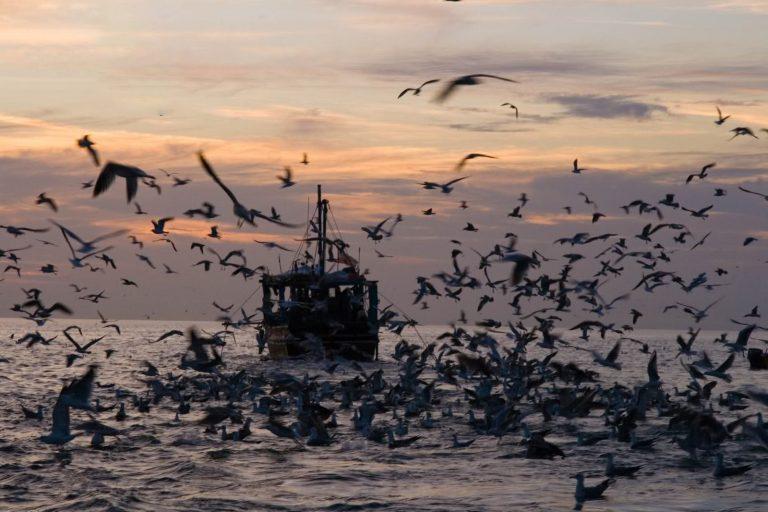 تفریحات دریایی قشم؛تجربه ای ناب در آب های نیلگون