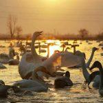 مناطق مناسب پرنده نگری در ایران