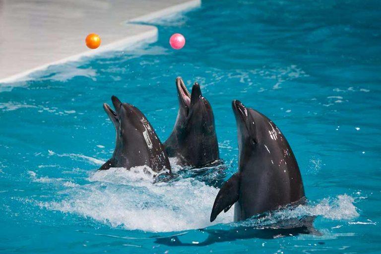 پارک دلفینها در کیش