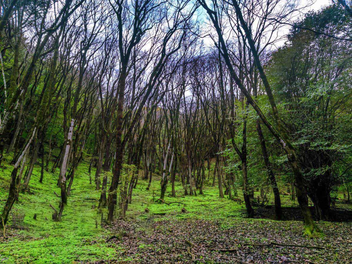 پارک جنگلی نقله بر