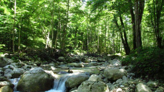 پارک جنگلی خانیکان