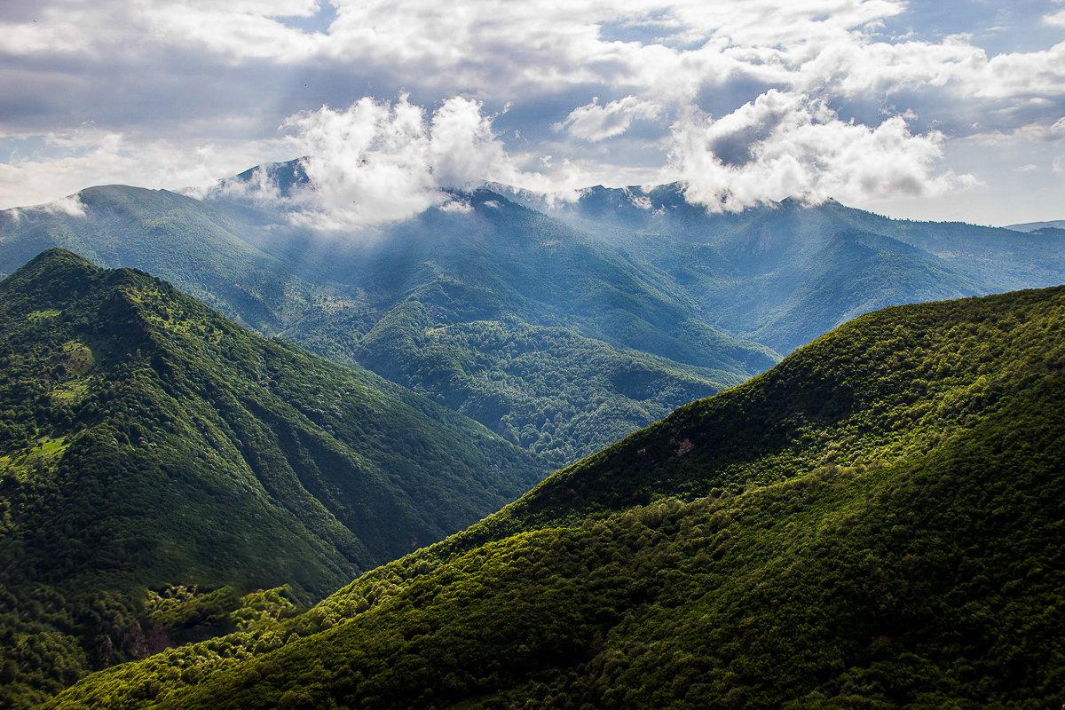 پوشش گیاهی متنوع جنگل ابر