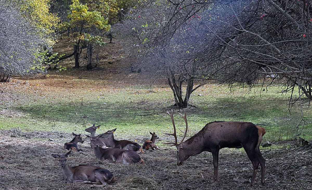 حیات وحش جنگل ارسباران