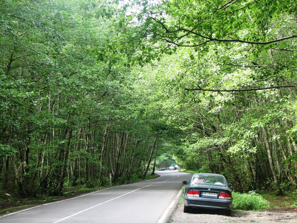 جاده جنگلی گیسوم