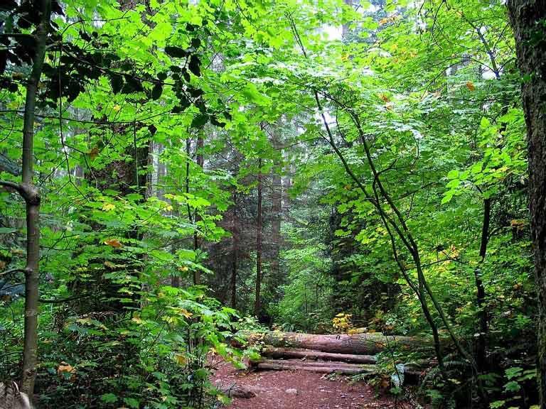 جنگل حهان نما