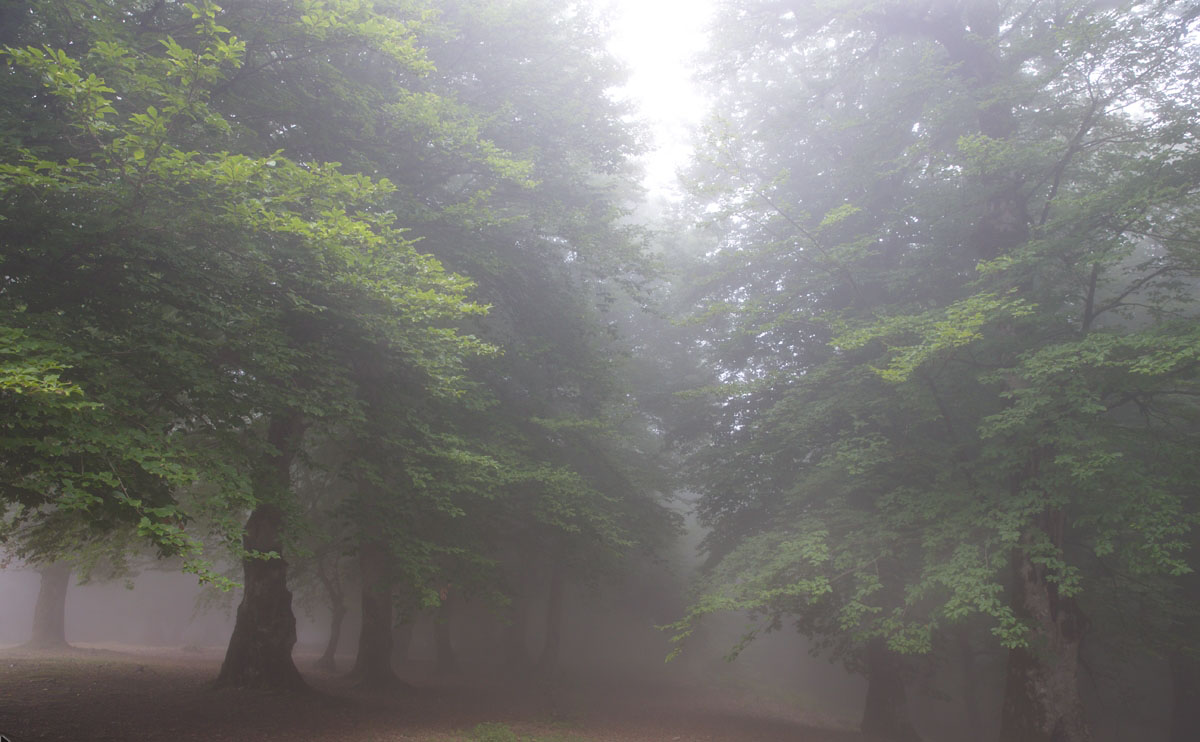 جنگل مازیچال