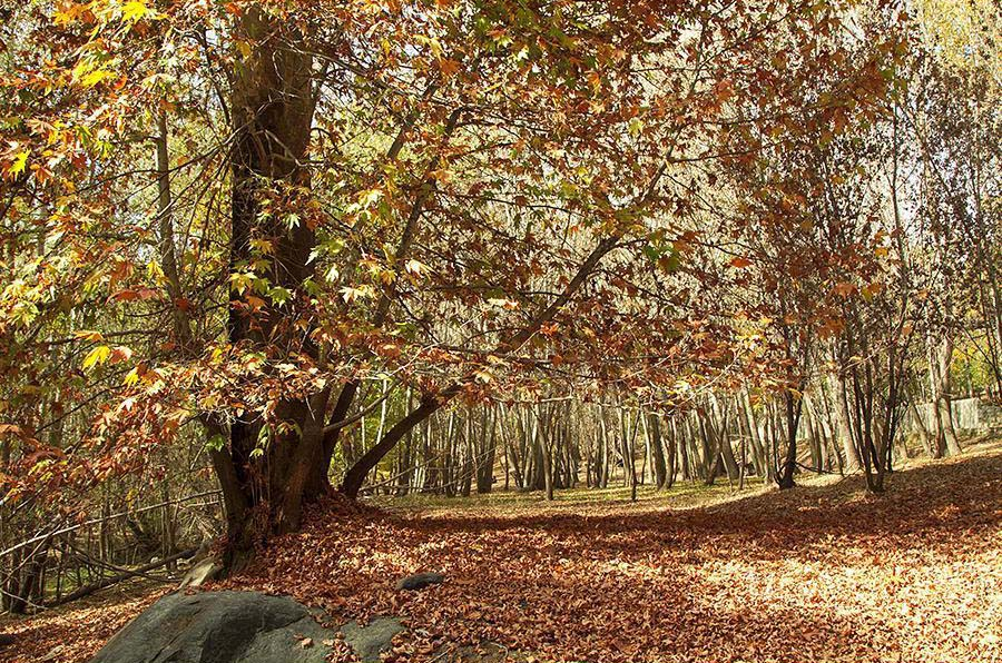 پارک جنگلی کمربسته