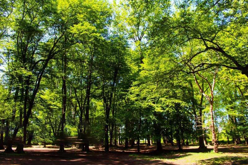پارک جنگلی اشپلا
