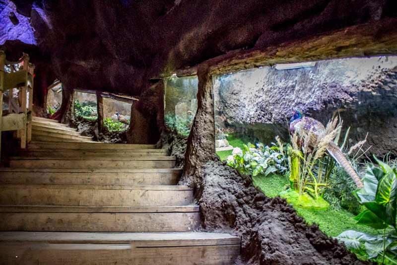 غار آکواریوم
