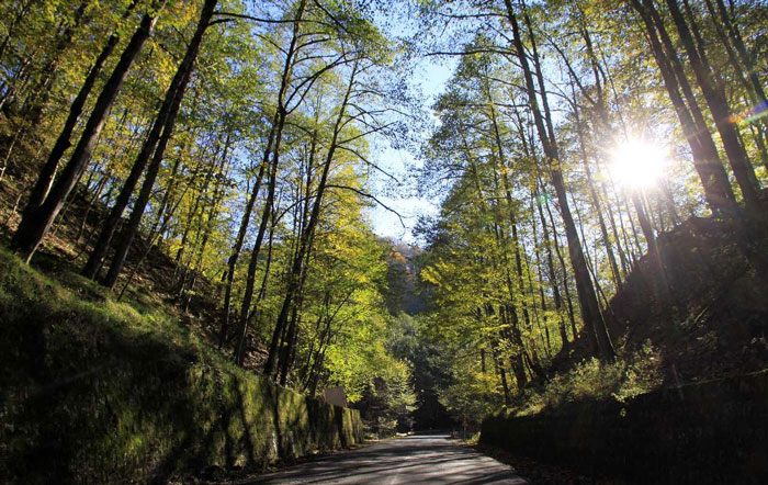 جاده جنگلی عباس آباد-کلاردشت