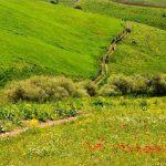 سارال کردستان