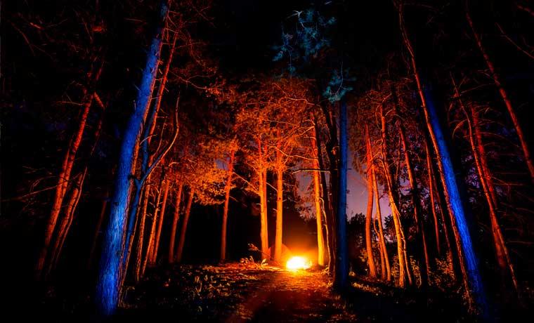 آتش روشن کردن در جنگل