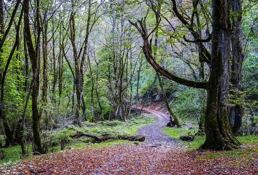 جنگل فین