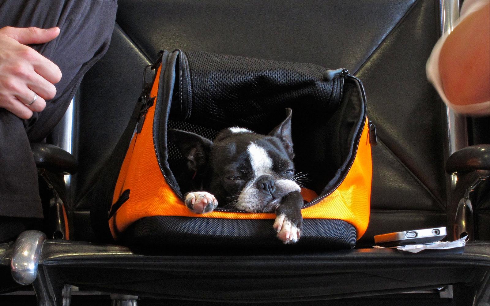 حمل حیوان در پروازهای بین المللی