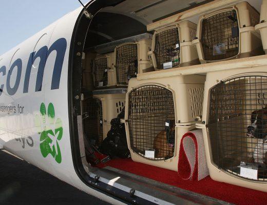 هزینه حمل حیوانات با هواپیما