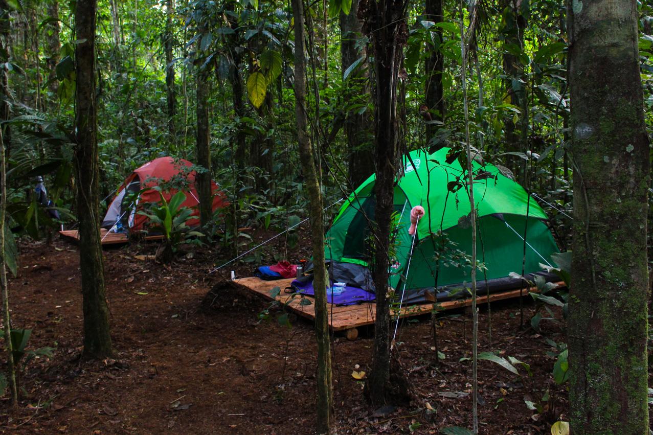 کمپ کردن در جنگل