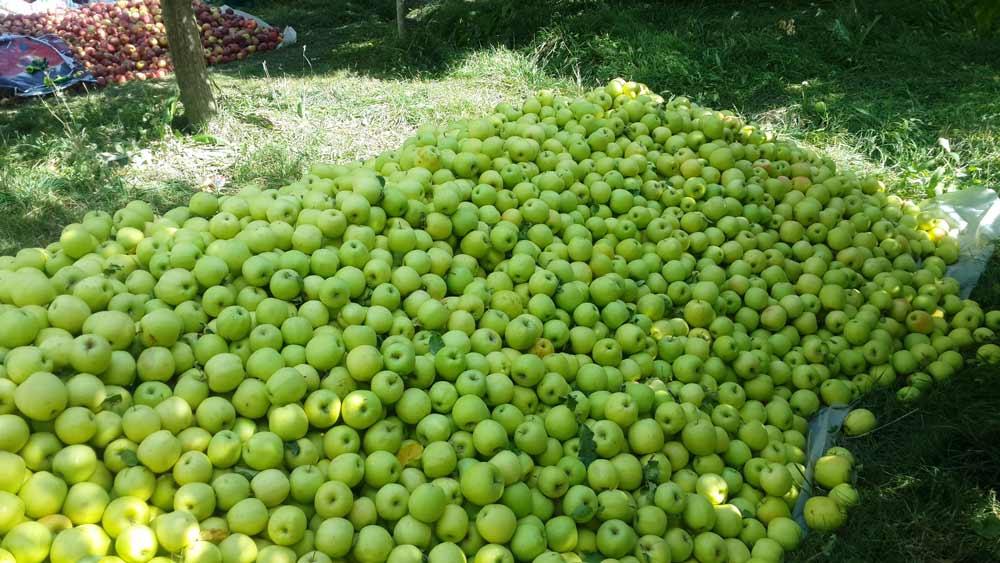 باغ سیب های روستای باراندوز