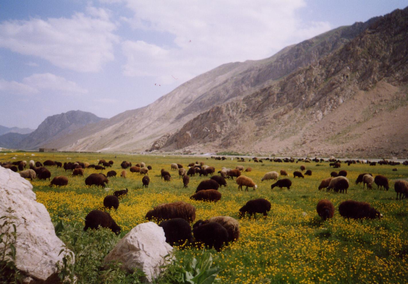 چشمه دوبرار