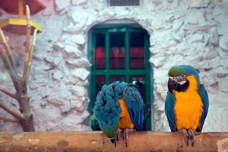 طوطی های باغ پرندگان اصفهان