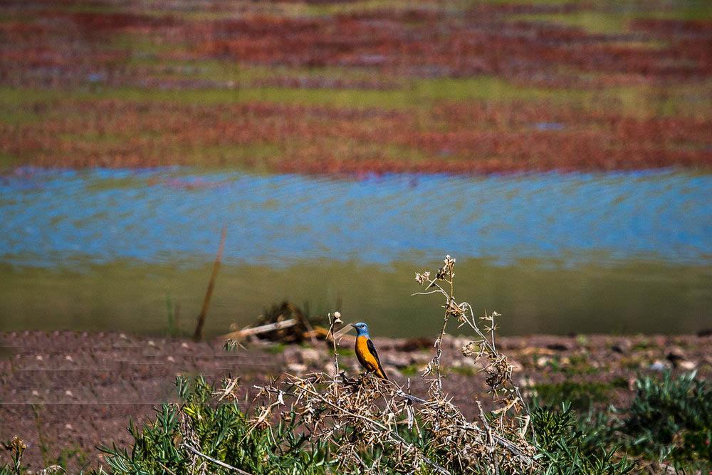 پرنده های دریاچه