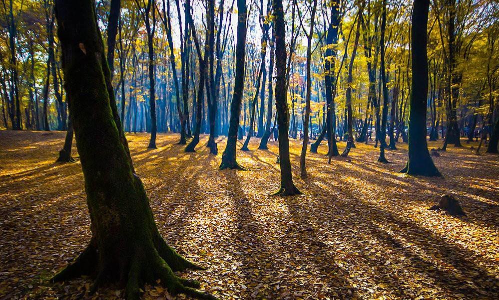 Caspian Hyrcanian mixed forests of Gorgan