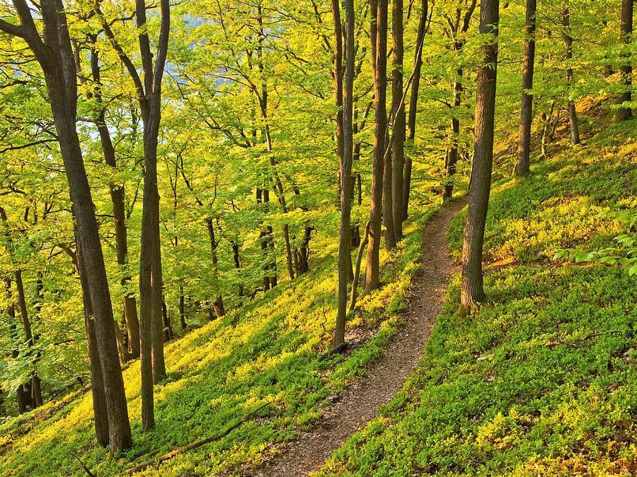 Trail in Alangdareh Forest