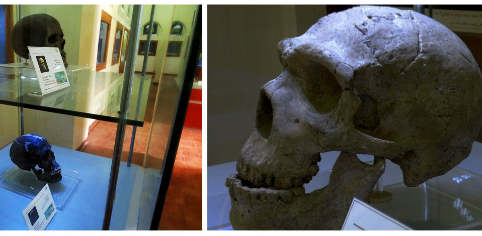 An ancient skull put on display in the Zagros Museum.