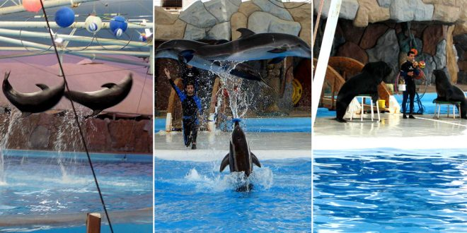 The Kish Dolphin Park holds a variety of animals, including sea lions.